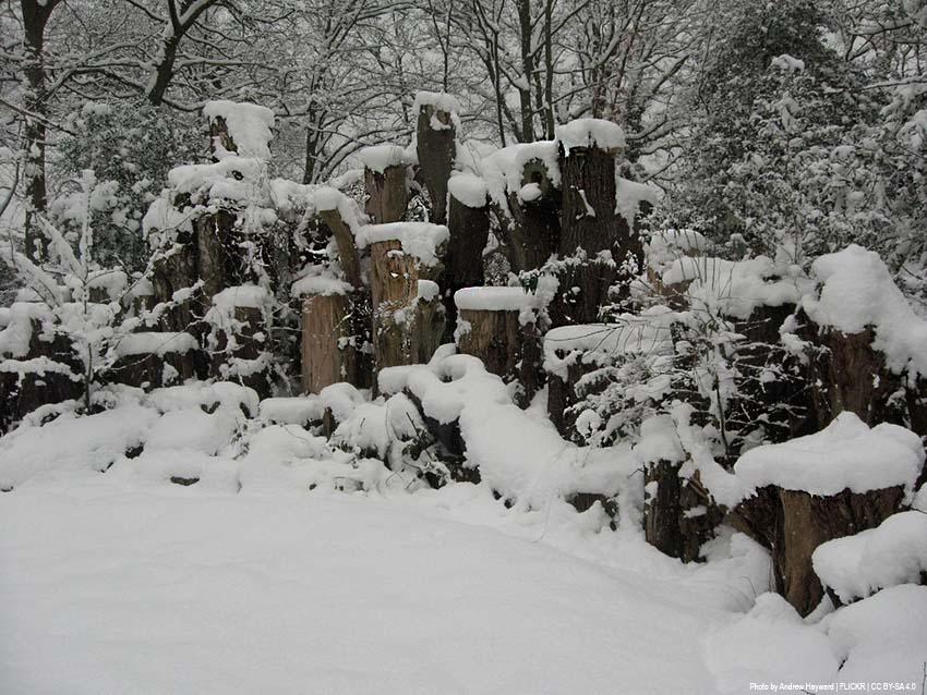 Hirschkäfermeiler im Park