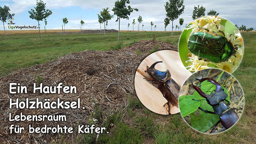 Holzhäcksel Haufen für Insekten