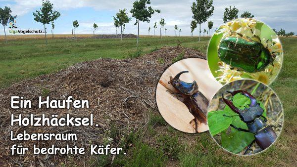 Holzhäcksel -Lebensraum für seltene Käfer